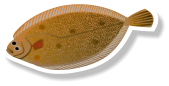 Fresh lemon Sole (per kg)