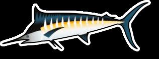 Fresh Marlin Loins (per kg)