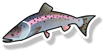 Fresh Rainbow Trout (per kg)