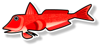 Fresh Red Gurnard (per kg)