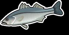 Fresh Sea bass (per kg)
