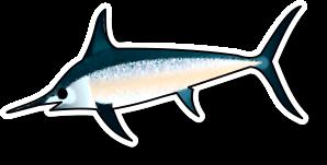 Fresh Swordfish Loin (per kg)
