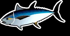 Fresh Tuna Loin (per kg)