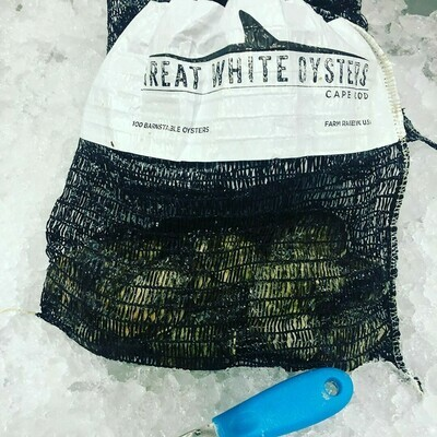Great White Oyster Two Dozen Pack - Osterville MA