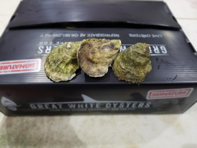 Great White Oysters - 50 ct
