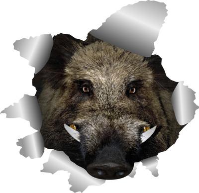 Klistermærke - Vildsvin