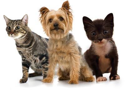 One Hour Animal Communication Reading