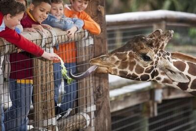 L.A Zoo
