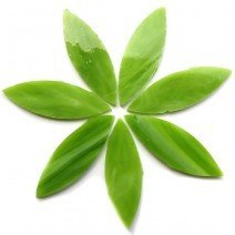 Green Tea Large