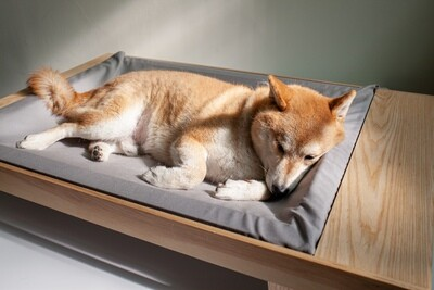 Daydream  - Pet Bed