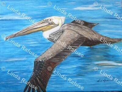 Sam The Pelican