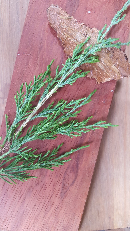 Primal Soap, Bars, Redwood-Cedar