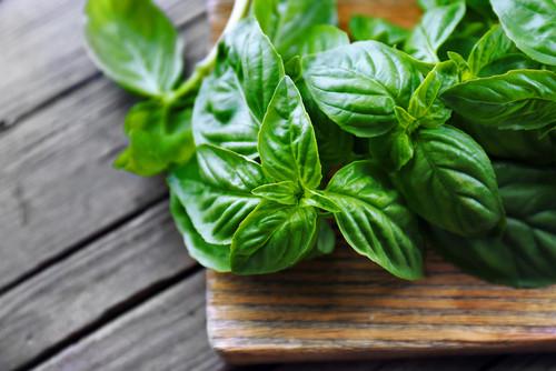 Italian green basil (50g) ريحان اخضر ايطالي