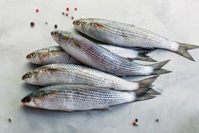 Wild Grey Mullet (1kg) سمك بوري