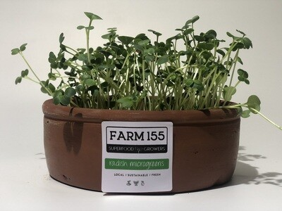 Radish Microgreens Grow Pot فخارت ميكروجرينز فجل
