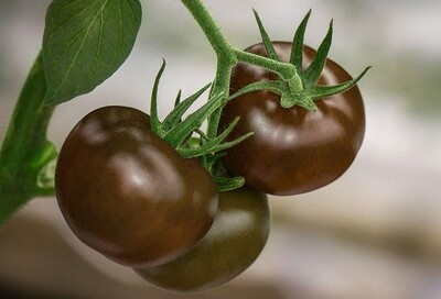 Black Vine Tomatoes (380g) بلاك فاين طماطم