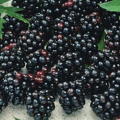 Blackberries (125g) توت اسود