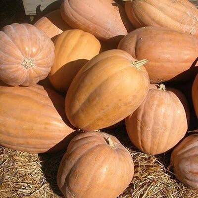 Pumpkin قرع عسل