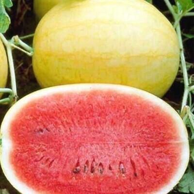 Golden Watermelon بطيخ ذهبي