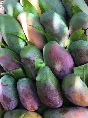 Siddiqa mango (3 kg) مانجو صديقة