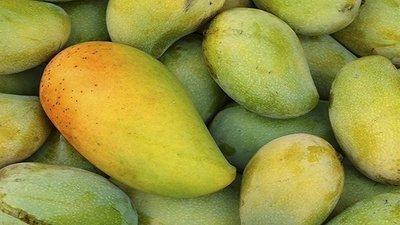 Sidr Hamama mango (1 kg) مانجو صدر حمامة