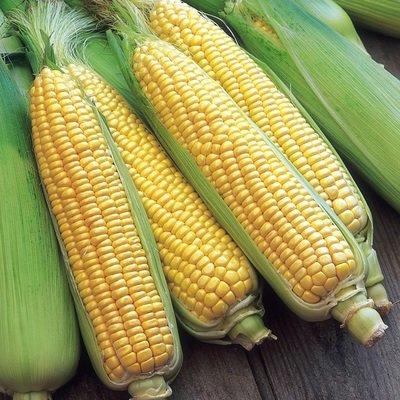 Sweet corn (3 pcs) ذره سكري