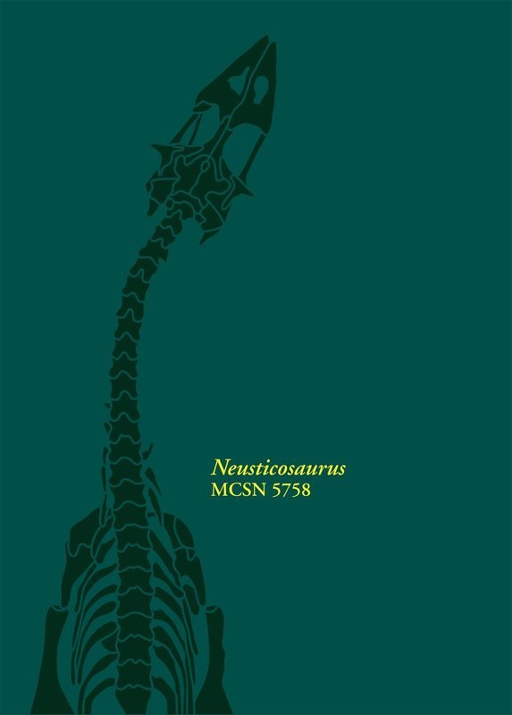 Neusticosaurus MCSN 5758