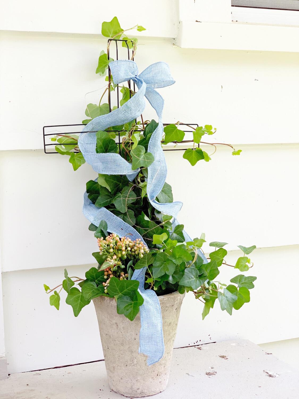 Cross Ivy Topiary