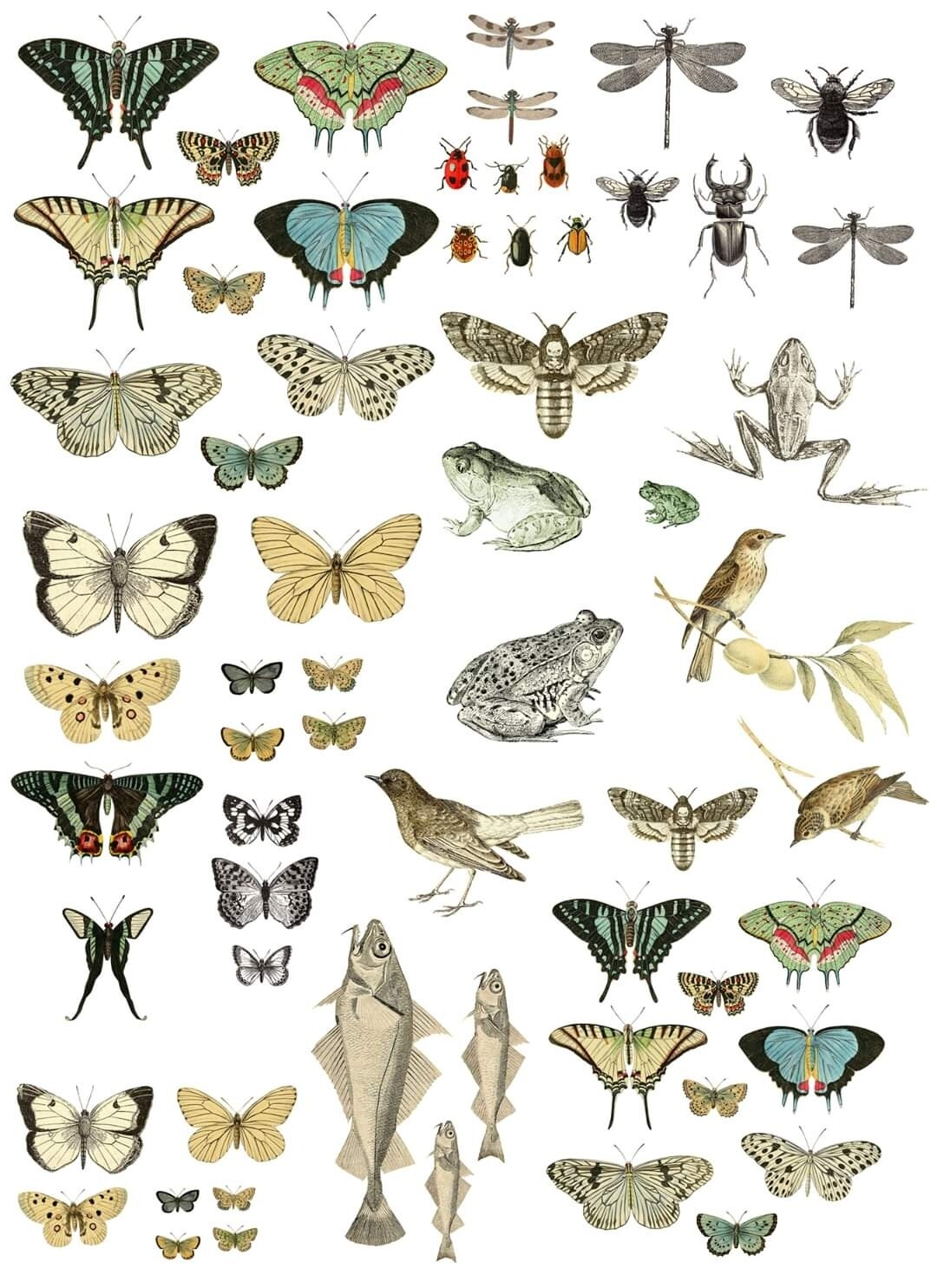 Entomology 24×33 Decor Transfer