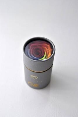 ForeverFiora Preserved Rose Capsule (Rainbow Color)