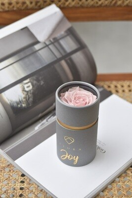 ForeverFiora Preserved Rose Capsule (Regular Color)