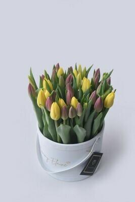 Lusso Medio: Tulips