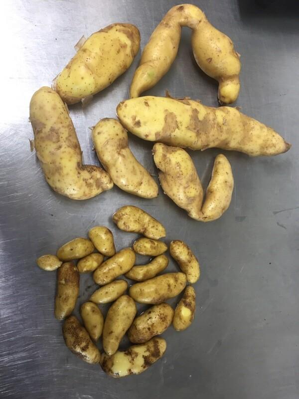 Patates rattes