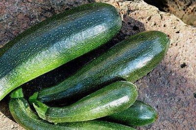 Courge zucchini bio 3 unités