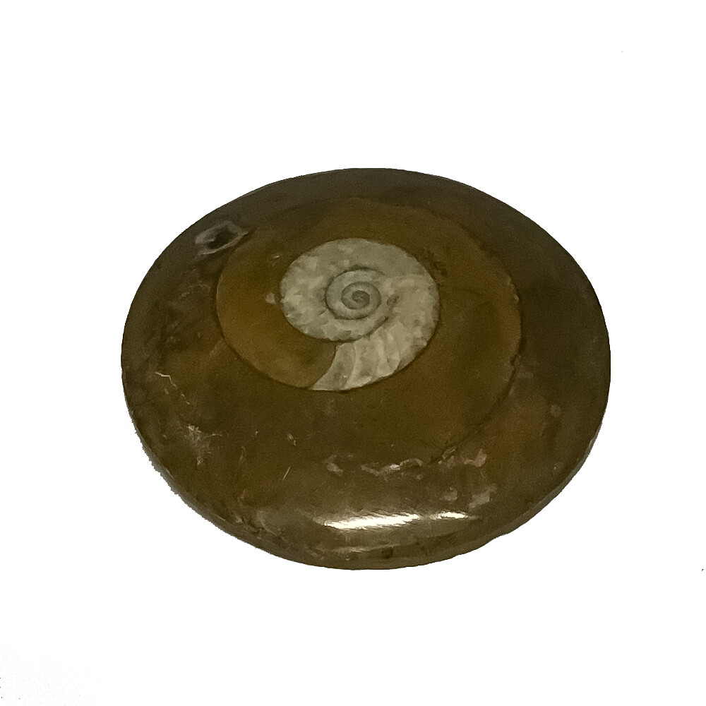 Ammonite (in Matrix) Fossil 2.5""