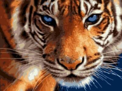 Картина по номерам (30х40см) Цветной EX5808 Взгляд тигра