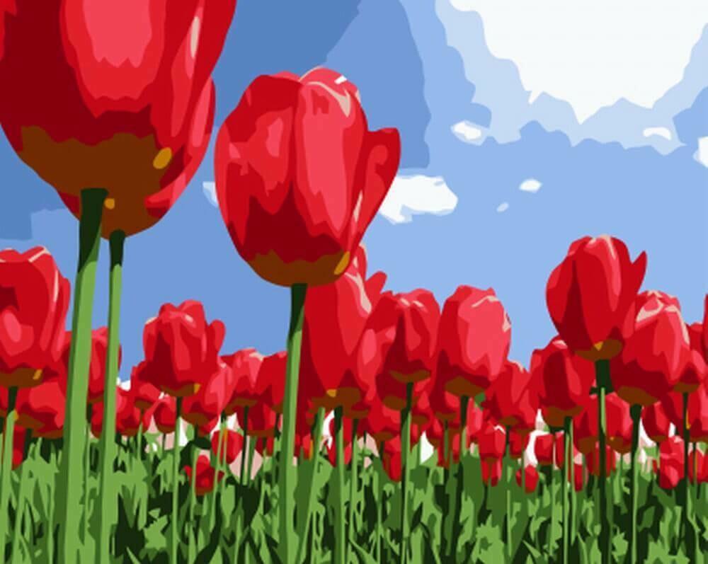 Картина по номерам (30х40см) Цветной EX5826 Поле тюльпанов