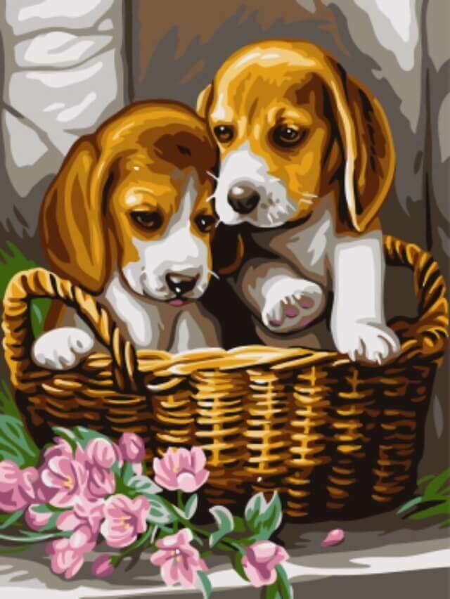 Картина по номерам (30х40см) Цветной EX5276 Щенки в корзине