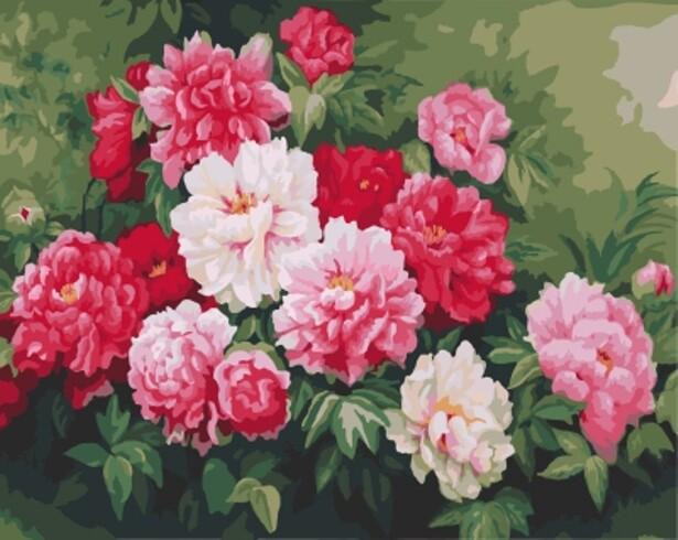 Картина по номерам (40х50см) Цветной GX7857 Куст пионов