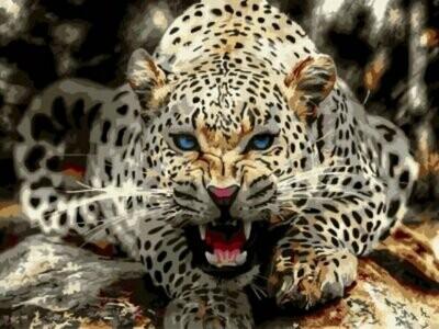 Картина по номерам (30х40см) Цветной EX5818 Леопард перед броском