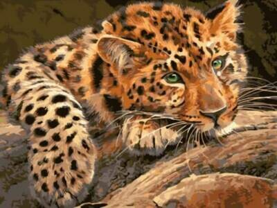 Картина по номерам (30х40см) Цветной EX5807 Леопард