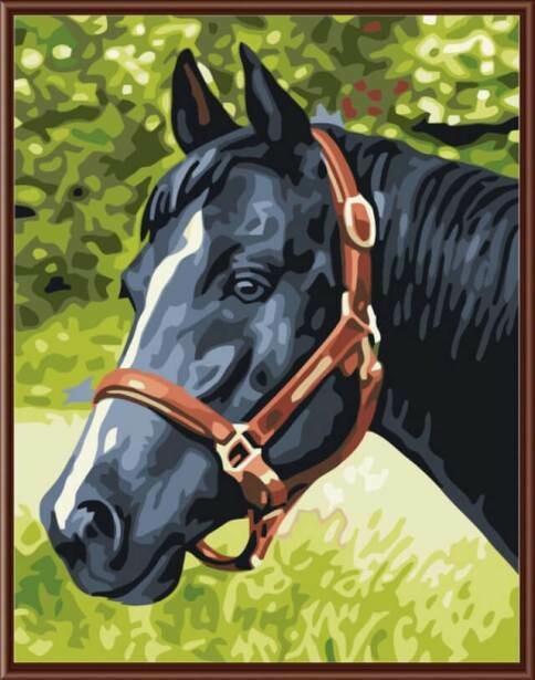 Картина по номерам (30х40см) Цветной EX5079 Черный конь