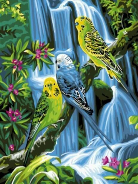 Картина по номерам (30х40см) Цветной EX5286 Волнистые попугаи