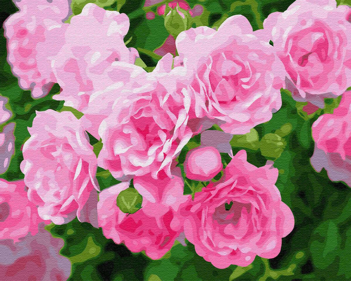 Картина по номерам (40х50см) Цветной GX28850 Кустовая роза