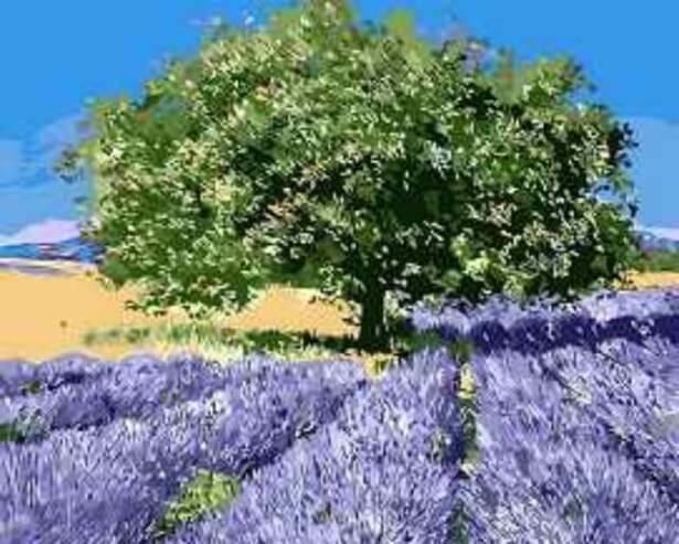 Картина по номерам (40х50см) Цветной MG7628 Дерево на лавандовом поле