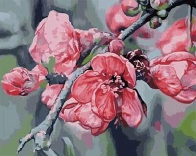 Картины по номерам(40х50см) Цветной GX6621 Ветка яблони