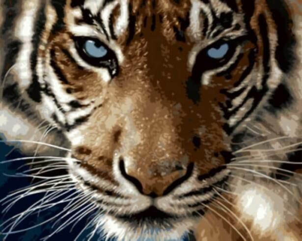 Картина по номерам (40х50см) Цветной GX8767 Взгляд тигра