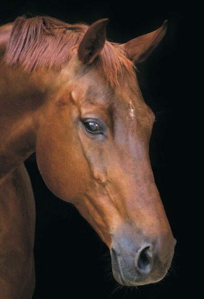 Набор алмазной вышивки (40х50см) Цветной LG199 Лошадь в тишине