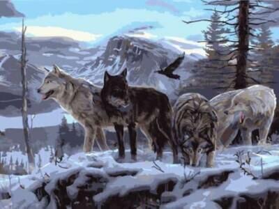 Картина по номерам (30х40см) Цветной EX5806 Волчья стая на скале