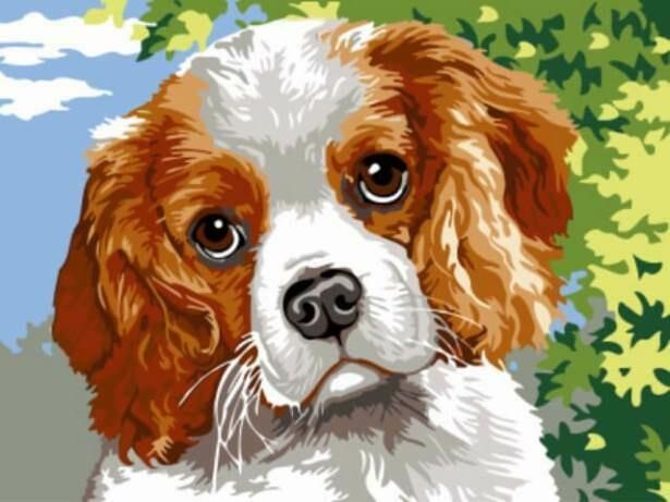 Картина по номерам (30х40см) Цветной EX5275 Спаниэль